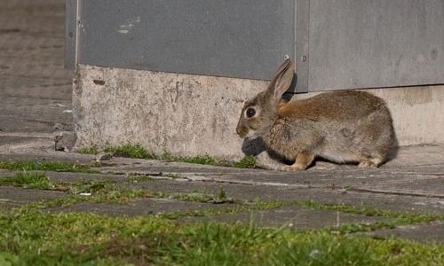 Тут заяц пробегал? В центре Челябинска заметили беглое животное