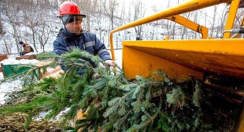 Вторая жизнь елки. Челябинские экологи разделяют и перерабатывают