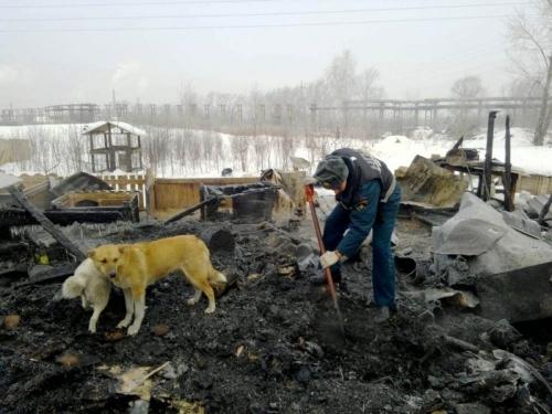 Собаки-погорельцы. Челябинскому приюту для животных требуется помощь