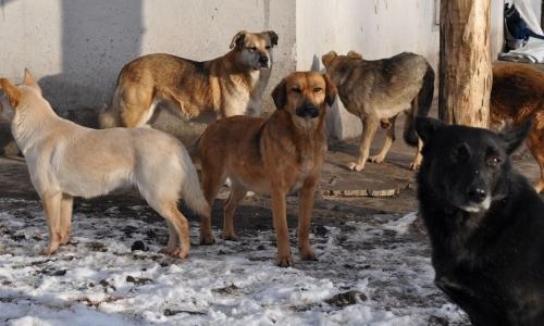 Подлежат отлову. Численность бродячих собак в Челябинске будут корректировать
