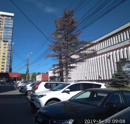 Общественники бьют тревогу. Сотни деревьев по всему Челябинску терпят бедствие