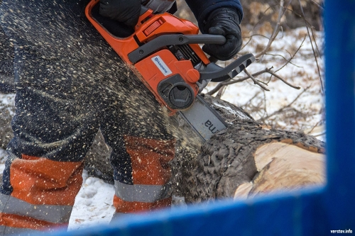 Убийца деревьев найден. В Челябинске разгорается скандал из-за опасного благоустройства