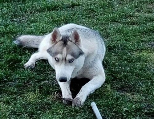 Охотник застрелил собаку. Трагедия произошла вчера на карьерах недалеко от микрорайона Парковый